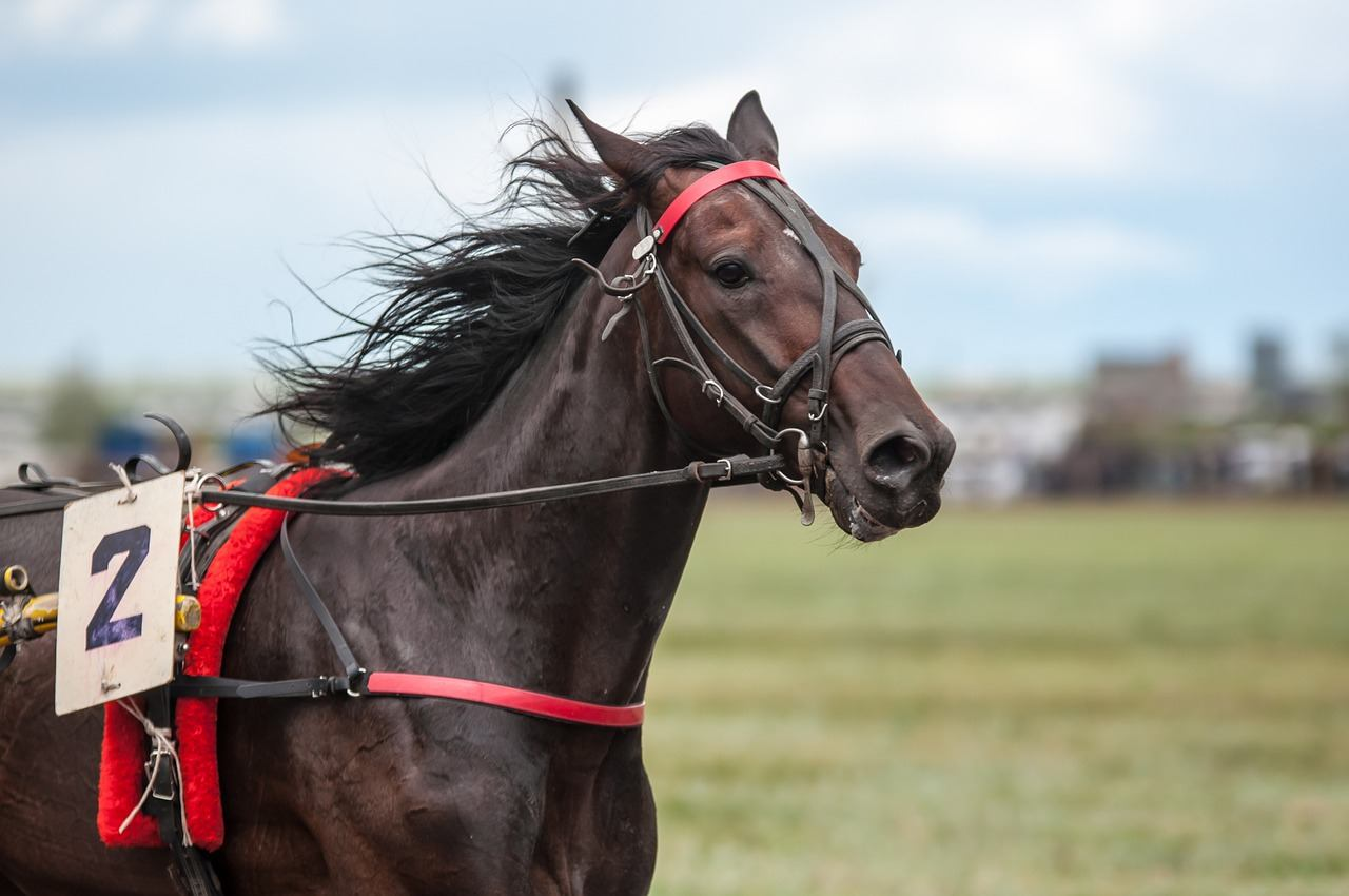 Should you invest in a race horse?