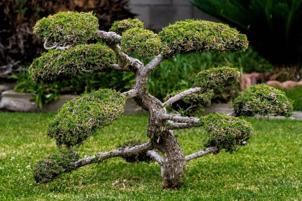 Investing in bonsai trees can yield big results. (Source)