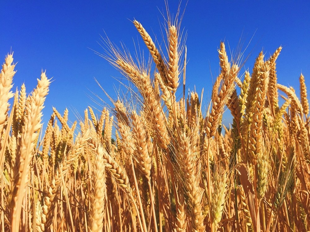 AG Weekly: U.S. market stabilizing, Europe's wheat of bad quality