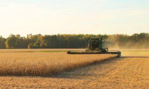 What did the spring rain bring to the soybean stock market?