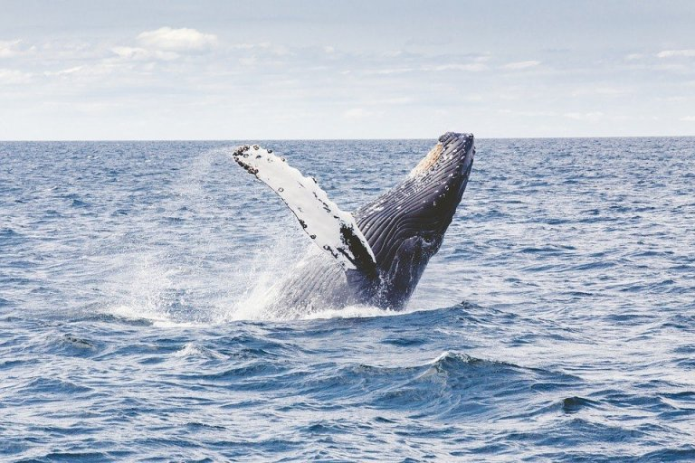 inland whale essay