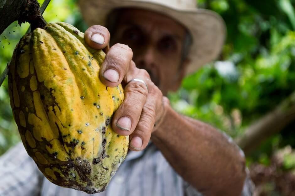 Cacao farmer.