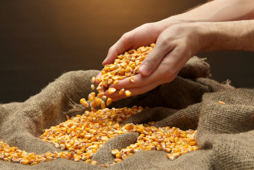 Corn markets move higher with favorable weather conditions