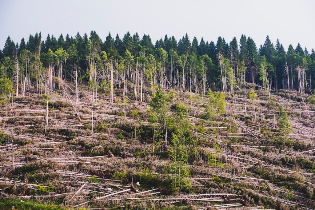 This picture show a forest being cut as a representation of deforestation.