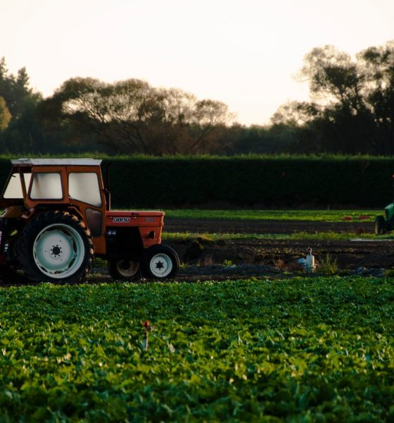 This picture show someone harvesting crops.