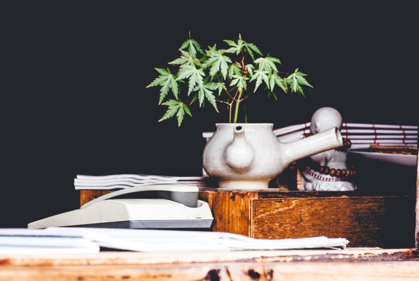 This picture show a cannabis plant on a teapot.