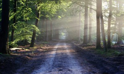 This picture show a road full of trees, representing sustainable solutions.