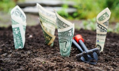 This picture show a someone planting money.