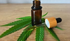 This picture show a cannabis oil.