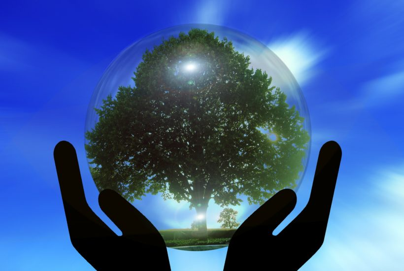 This picture show a tree inside a glass ball.