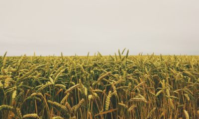 This picture show an agricultural field.