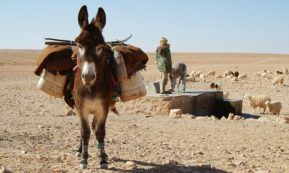 This picture show a donkey in the middle of a desert.