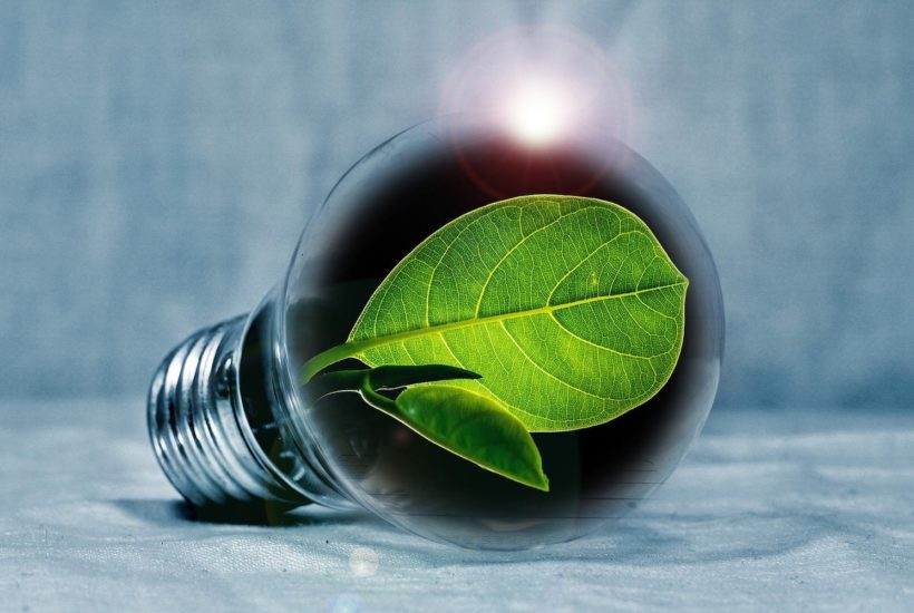 This picture show a green leaf inside a lightbulb.