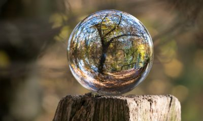 This picture show a tree through a crystal ball.