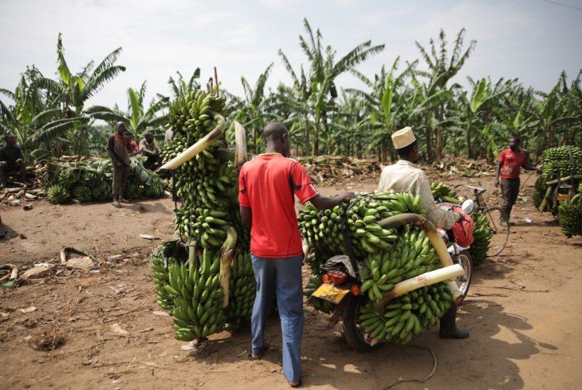 This picture show a plantation.